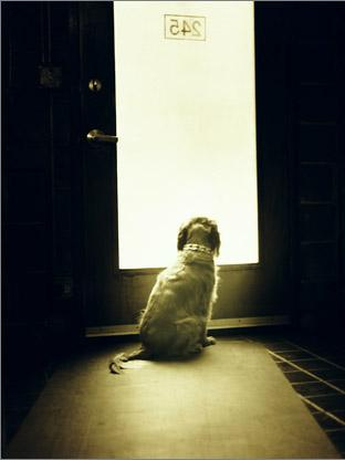 miss_dog-web.jpg